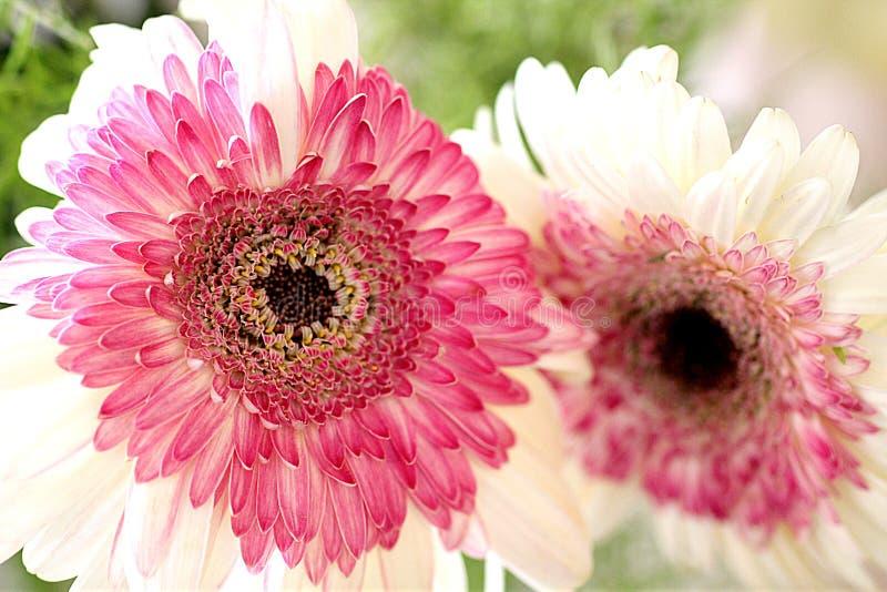 Kwiat jest rzeczą piękno uspokajać twój umysł zdjęcie stock