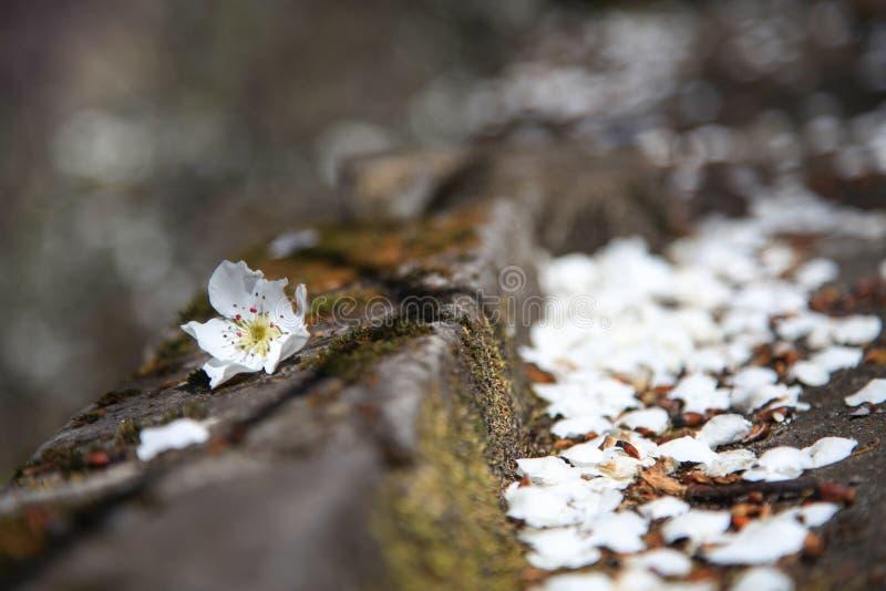 Kwiat jest spada puszkiem w normalnej wiosce w prowincja sichuan Chiny zdjęcie royalty free