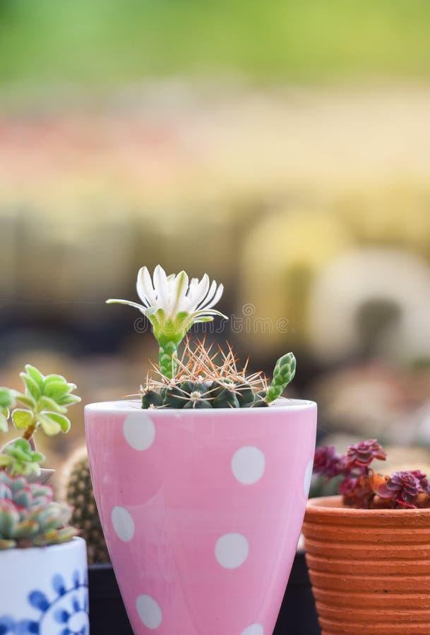 kwiat kaktusa z ogniska wybranych phpto up obraz royalty free