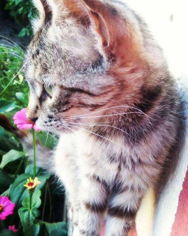 Kwiat kiciunia zdjęcie stock