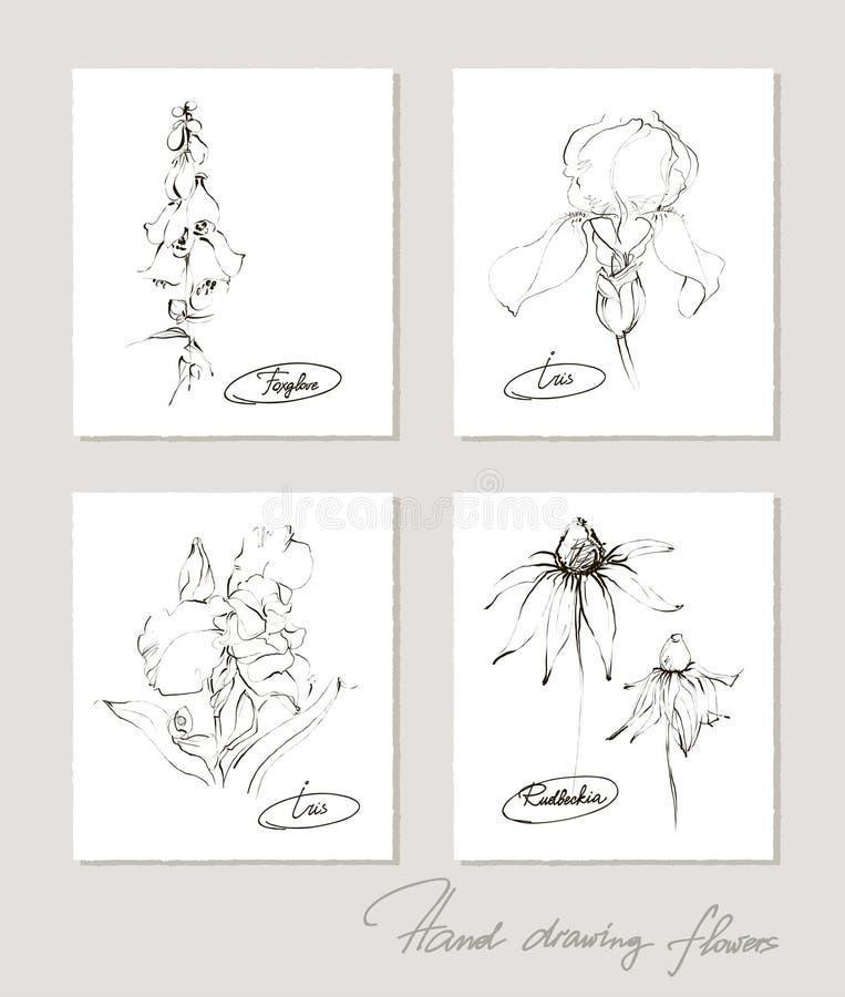 Kwiat kolekcja realistyczni nakreślenia kwiaty royalty ilustracja