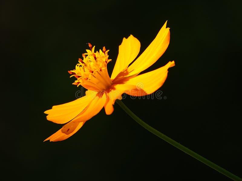 Kwiat który no jest pomarańcze obrazy royalty free