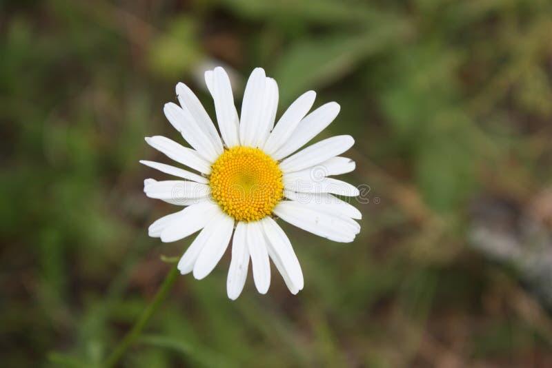 Kwiat który przepowiada ty miłości zdjęcia royalty free