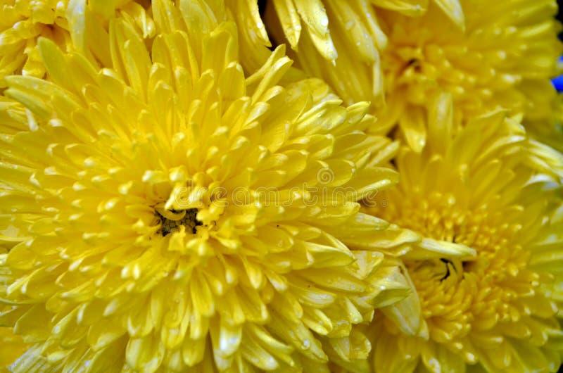 Kwiat kwiat obrazy stock
