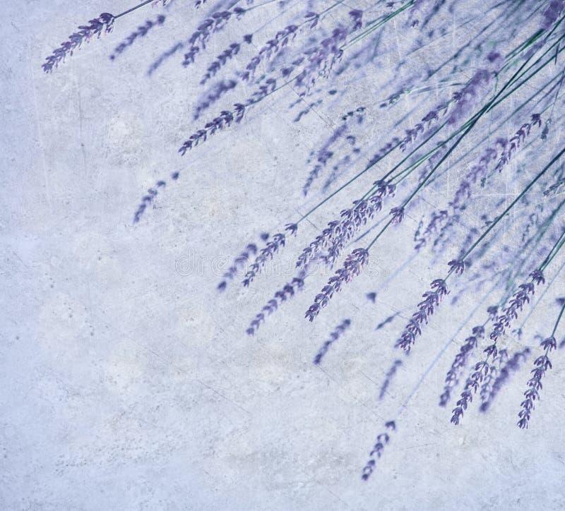 Kwiat lawendowa granica zdjęcia stock