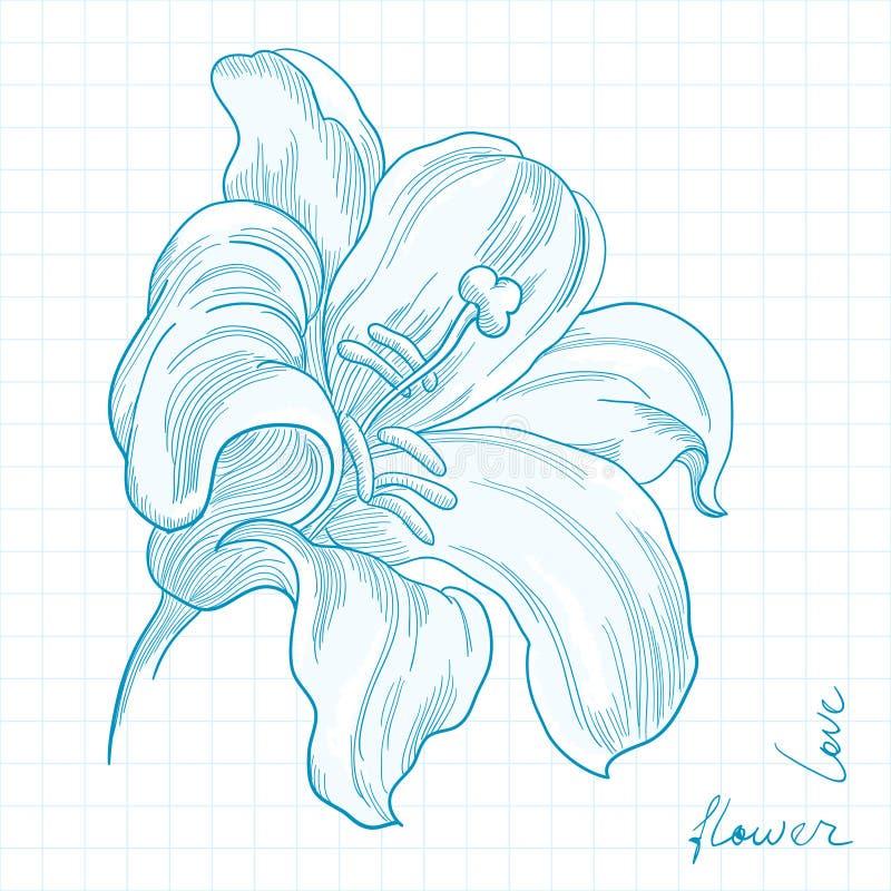 kwiat leluja ilustracji
