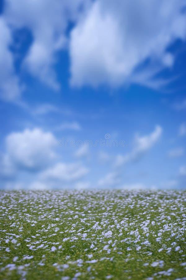 kwiat lniane zdjęcia stock