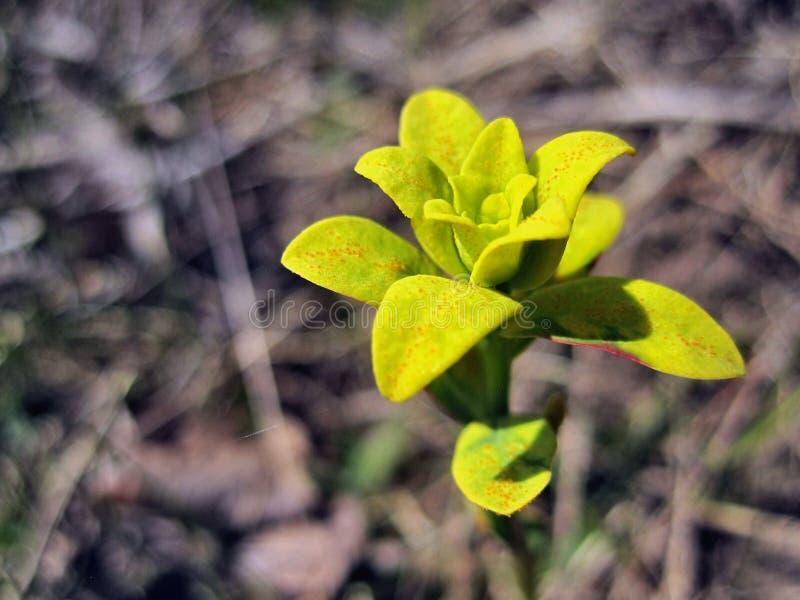 Kwiat lub żółta roślina obraz royalty free
