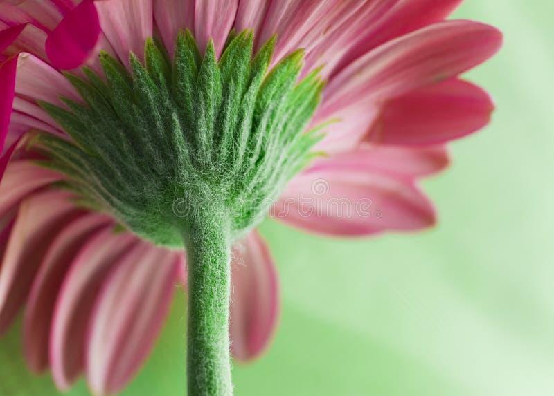 kwiat makro łodygi obrazy stock