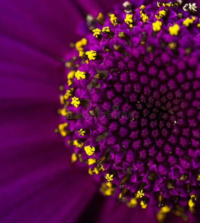 Kwiat Makro- fotografia royalty free