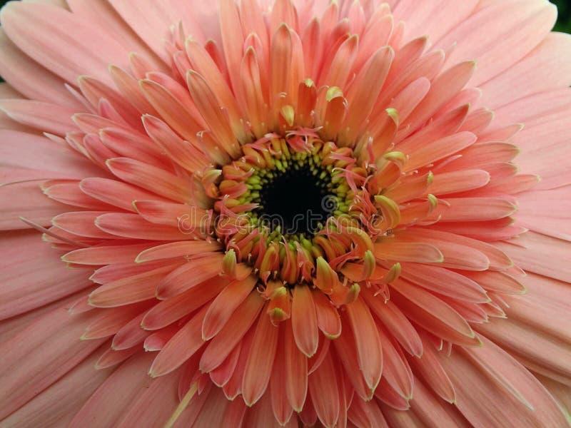 Kwiat Makro- zdjęcie royalty free