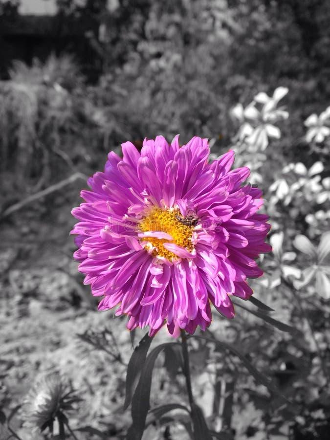Kwiat, makro-, obraz stock