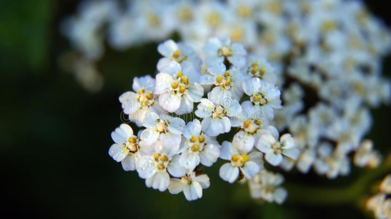 Kwiat Makro- zdjęcie stock