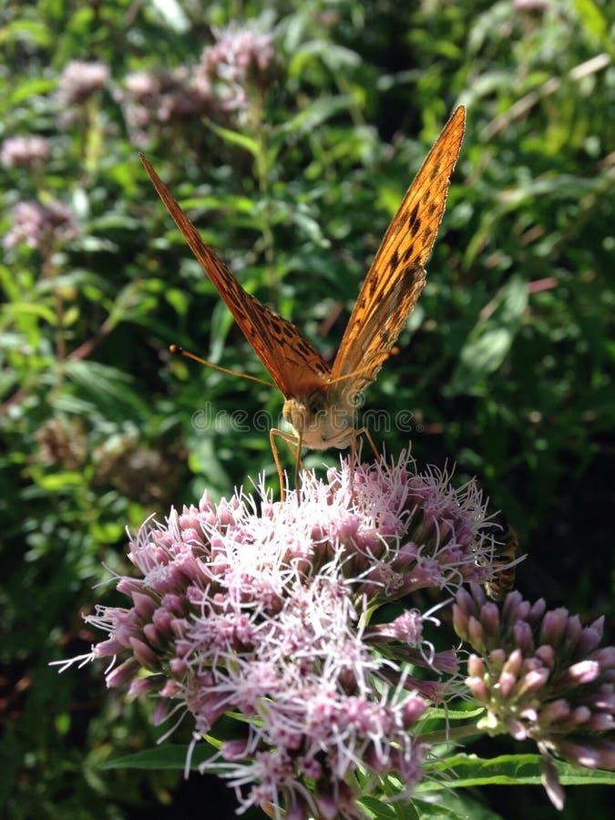 Kwiat, makro-, motyl obraz royalty free