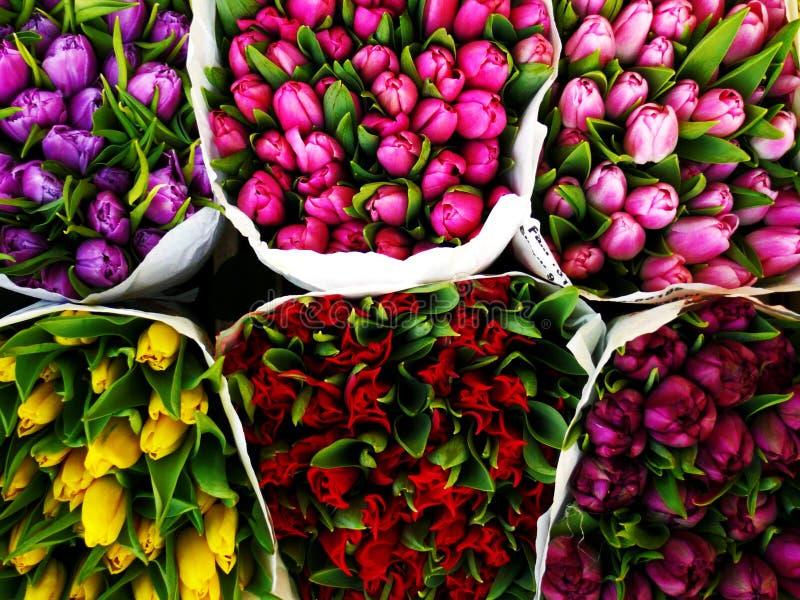 kwiat market1 obrazy stock