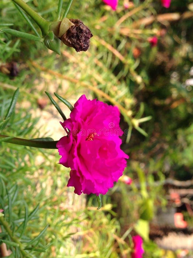Kwiat miłość obrazy stock