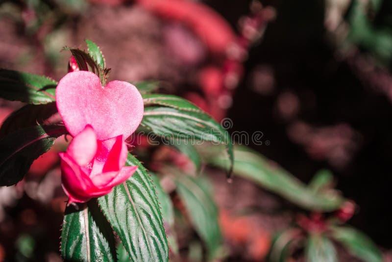 Kwiat miłość obraz stock