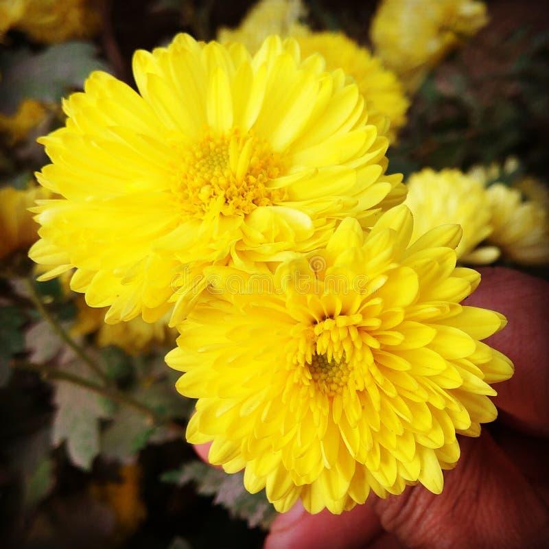 Kwiat miłość fotografia royalty free