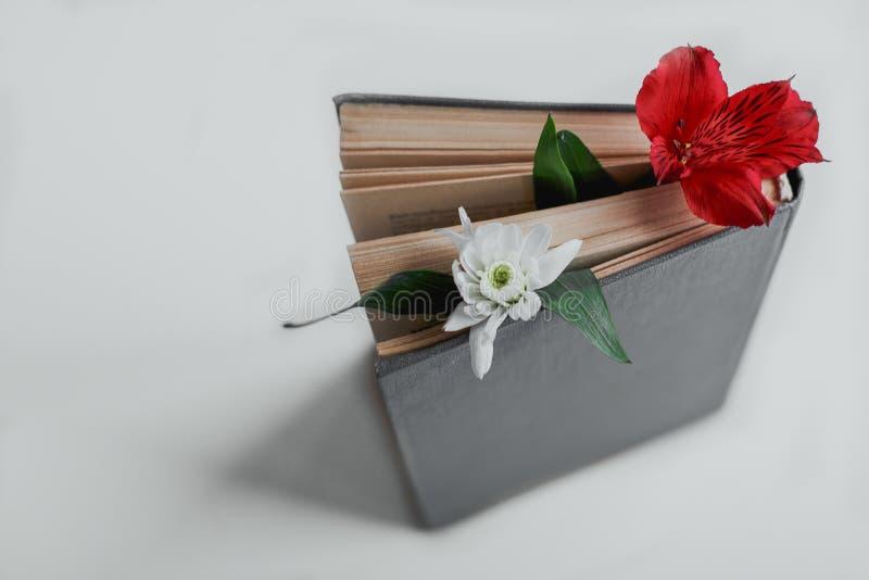 Kwiat mi?dzy stronami ksi??ka obrazy stock