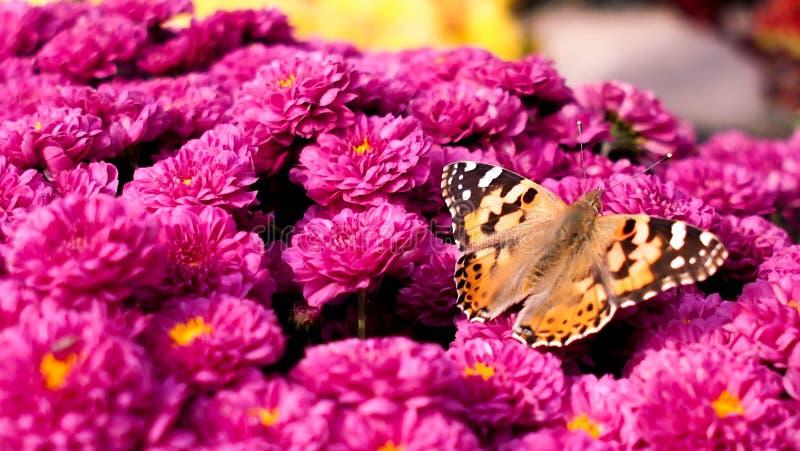 Kwiat & motyl obraz royalty free