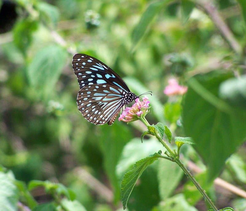 Download Kwiat motyla zdjęcie stock. Obraz złożonej z napój, łaciasty - 136586