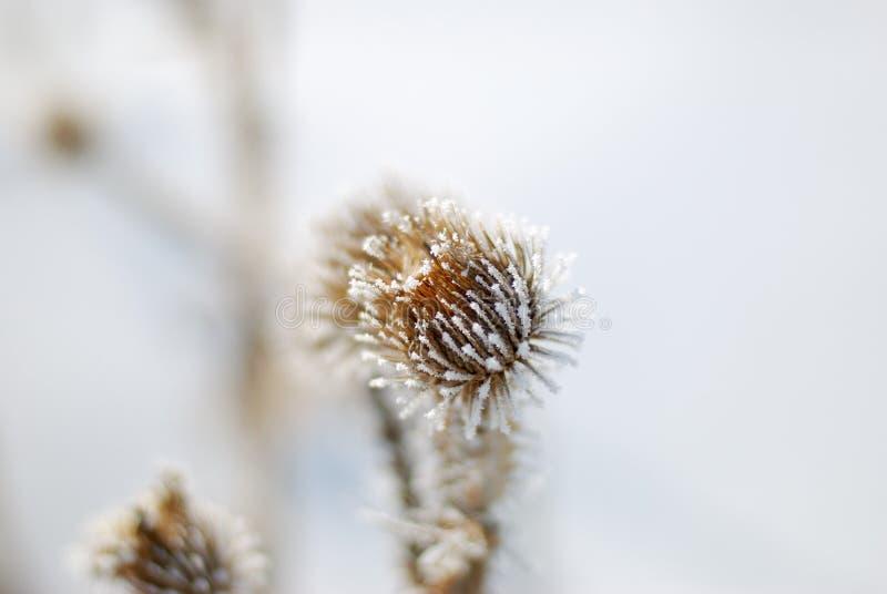 kwiat mrożone fotografia stock