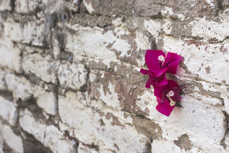 Kwiat na ścianie zdjęcia royalty free