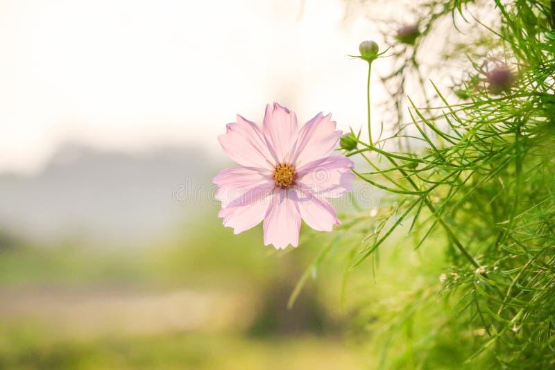 Kwiat na błękitnych tło zieleni liściach fotografia stock