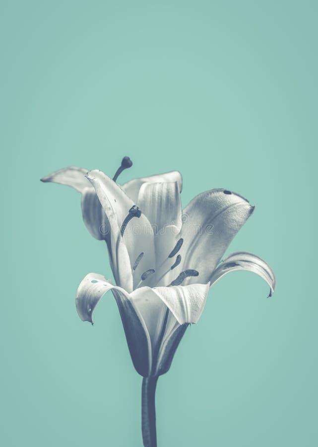 Kwiat Na Błękitnym projekcie zdjęcie stock