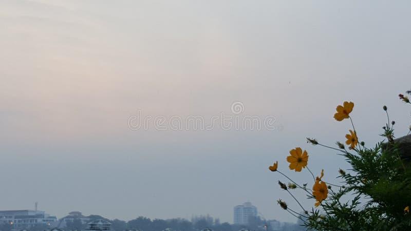 kwiat na niebieskim niebie zdjęcie stock