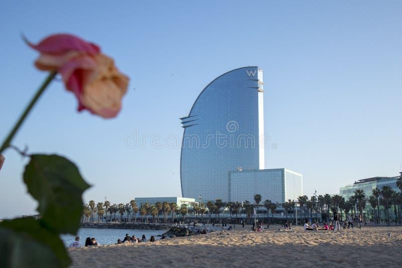 Kwiat na plaży Barcelona obrazy stock