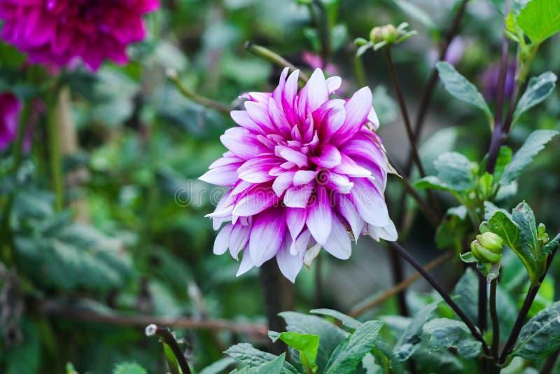 Kwiat na zielonym tło zieleni liściu zdjęcia stock