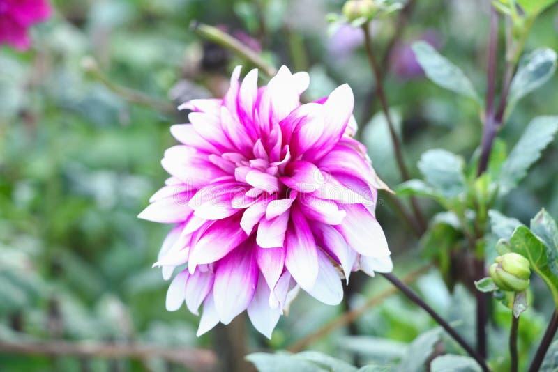 Kwiat na zielonym t?o zieleni li?ciu zdjęcia royalty free