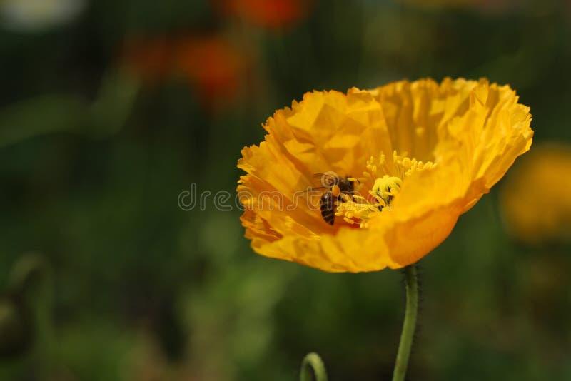 Kwiat natura, A kwiat cecha obrazy stock