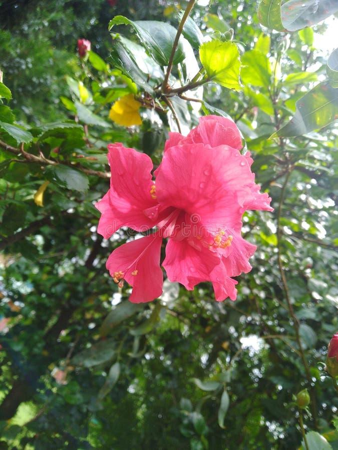 Kwiat, natura, eco, colourofnature, zbliżenie zdjęcia royalty free