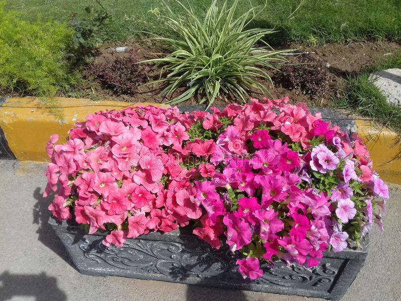 Kwiat natura ja fotografia royalty free