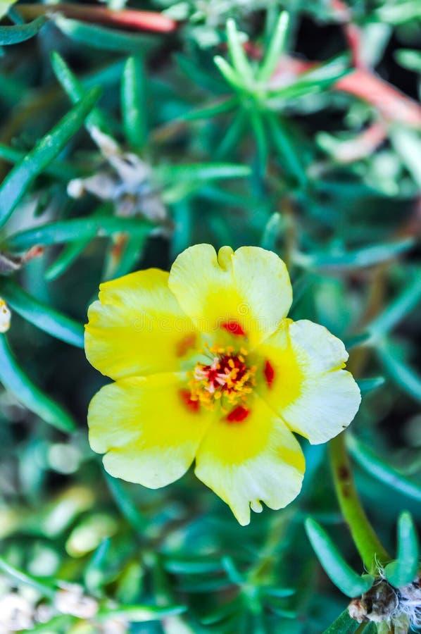 Kwiat, natura, kwiaty, kolor żółty, słonecznik, rośliny obrazy stock