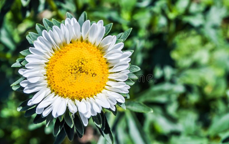 Kwiat Natura Kwiaty Słonecznik rośliny obraz royalty free