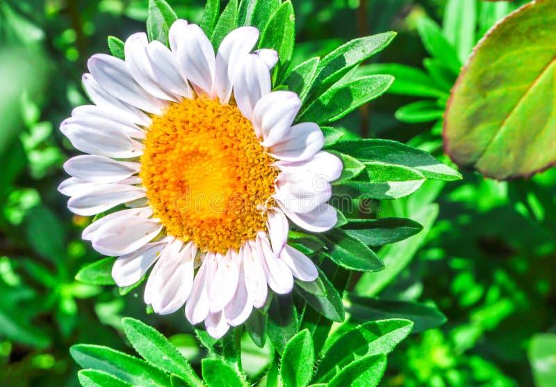 Kwiat Natura Kwiaty Słonecznik rośliny fotografia stock