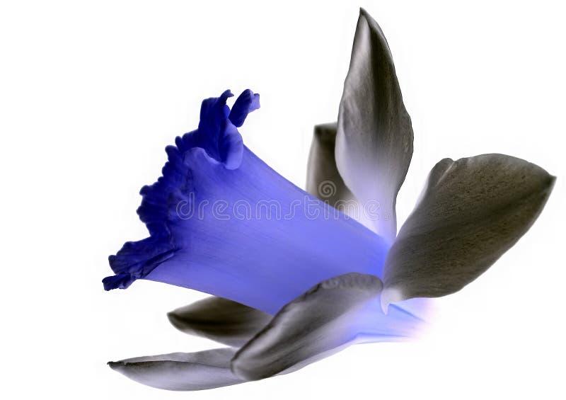 Kwiat Odizolowane Obraz Stock