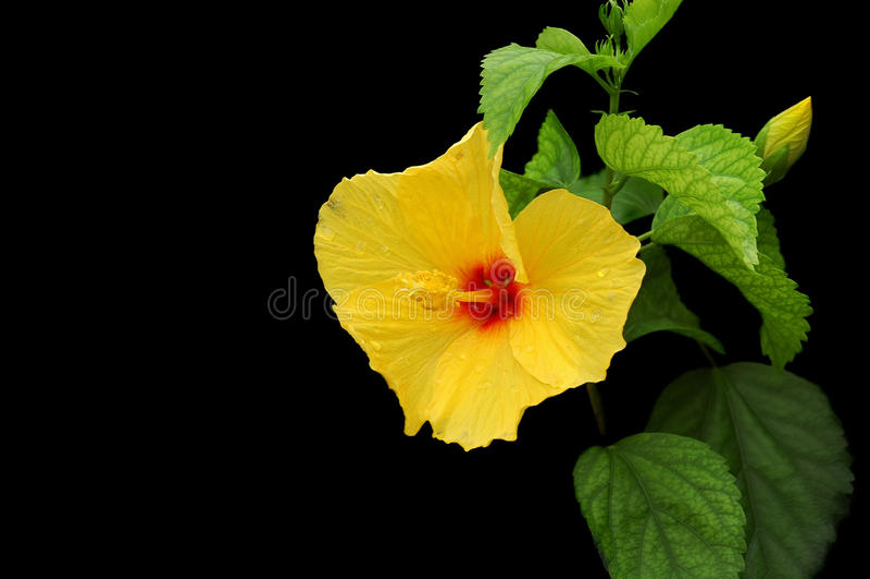 kwiat odizolowywający zdjęcia stock
