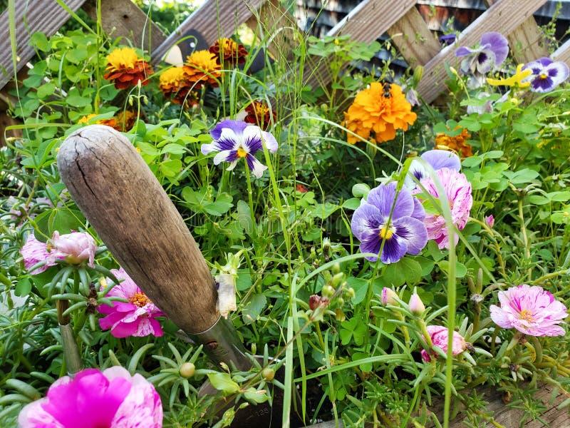 Kwiat ogrodowy z pikiem obrazy stock