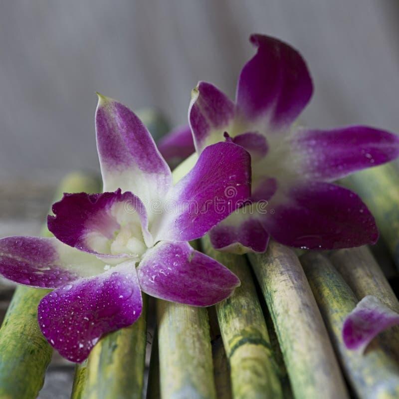 kwiat orchidea obrazy stock