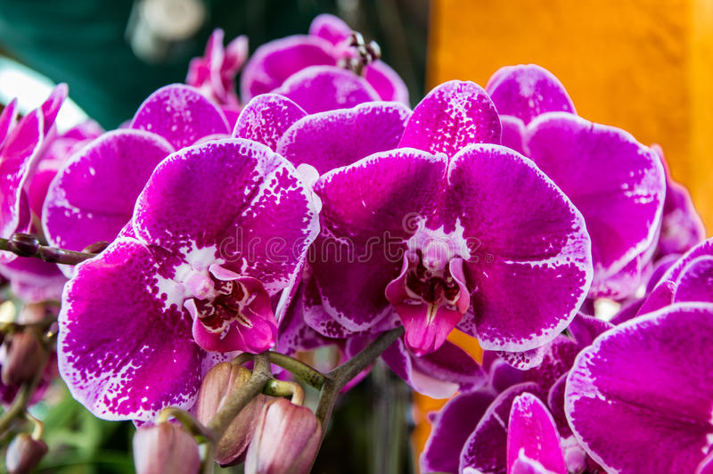 kwiat orchidea obraz stock