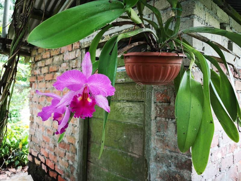 Kwiat orchidei poza ogrodem zdjęcie stock