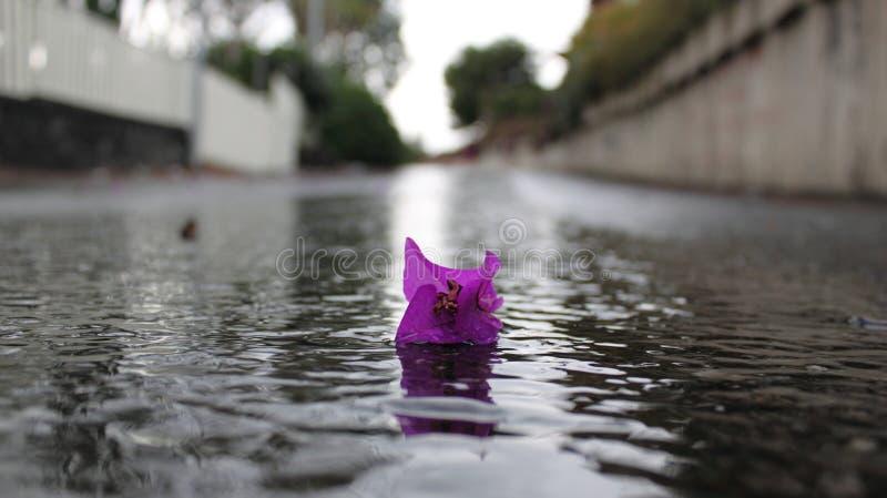 kwiat osamotniony obrazy royalty free