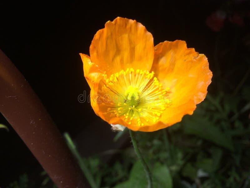 Kwiat ostatnio brać zdjęcie royalty free
