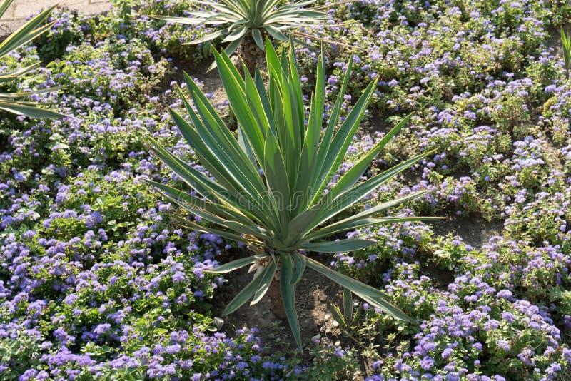 kwiat palma zdjęcia stock