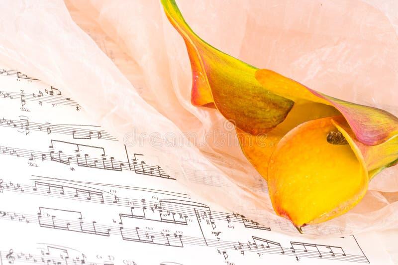 kwiat piękne notatki fotografia royalty free