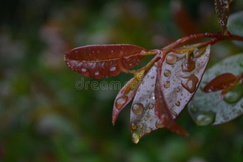 Kwiat po deszczu z wodnymi kropelkami fotografia royalty free